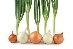 Zwiebeln und Scallions Lizenzfreies Stockfoto