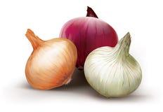 Zwiebeln von verschiedenen Farben Stockfoto