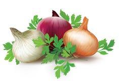 Zwiebeln von verschiedenen Farben und von Petersilie Stockbild