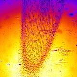 Zwiebelurlaub unter Mikroskopie Stockbilder