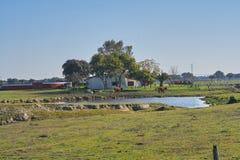 Zwierzęcy gospodarstwo rolne z krowami i jeziorem zdjęcia royalty free