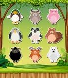 Zwierzęcy majcher na natury tle royalty ilustracja