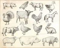 zwierząt dziecka inkasowe remisu gospodarstwa rolnego ilustracje więcej mój portfolio Wektorowe eps10 ilustracje ilustracji