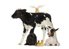 zwierząt gospodarstwa rolnego krajobraz wiele sheeeps lato Zdjęcia Royalty Free
