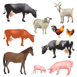 zwierząt gospodarstwa rolnego krajobraz wiele sheeeps lato