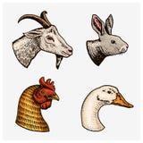 zwierząt gospodarstwa rolnego krajobraz wiele sheeeps lato Głowa domowej kózki koguta gąski królik Logowie lub emblematy dla sign Ilustracja Wektor