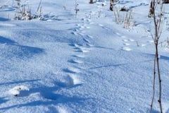 Zwierzę ślada w świeżym luźnym śniegu zdjęcie royalty free