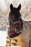 Zwierzę domowe biegowy koń przy rolnym padokiem zdjęcia royalty free