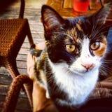 Zwierzę domowe kotów tło Fotografia Royalty Free