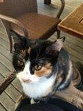 Zwierzę domowe kotów tło Fotografia Stock