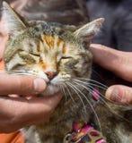 Zwierzę domowe kot dla spaceru w dzikim obrazy royalty free