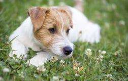 Zwierzę domowe opieka - szczęśliwy zdrowy psi szczeniak Obrazy Royalty Free