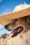 Zwierzę domowe pies jest ubranym słomianego słońce kapelusz przy plażą Fotografia Stock