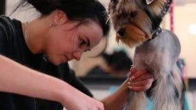 Zwierzę domowe przygotowywa salon Psi Dostaje włosy Ciący Przy Zwierzęcym zdroju salonem zbiory