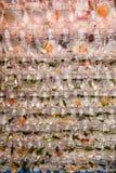 Zwierzę domowe ryba na sprzedaży przy Goldfish rynkiem w Hong Kong Fotografia Royalty Free