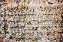 Zwierzę domowe ryba na sprzedaży przy Goldfish rynkiem w Hong Kong Zdjęcie Stock