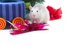 zwierzę domowe szczur Obrazy Stock