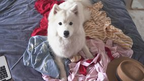 Zwierzę domowe zrobił bałaganowi na łóżku w sypialni zdjęcie wideo