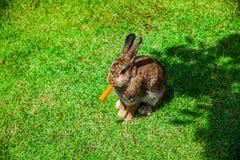 Zwierzę jest królikiem fotografia stock
