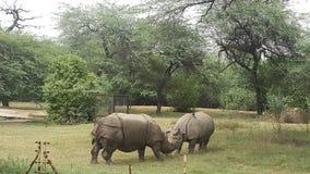 Zwierzę nosorożec Obrazy Royalty Free