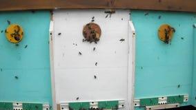 Zwierzę pszczoły zbiory