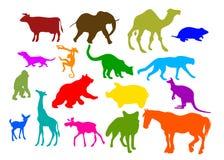Zwierzę set Obrazy Stock