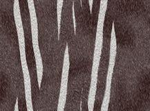 Zwierzęca futerkowa zebra obrazy stock