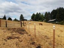Zwierz?ca klauzura na gospodarstwie rolnym z koniami, brudem i kaku, fotografia stock