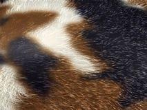 Zwierzęca tekstura odizolowywająca na białym tle Zdjęcia Royalty Free