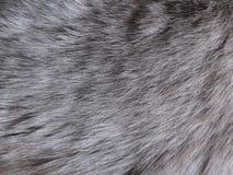 Zwierzęca wełna Zdjęcie Stock