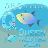 Zwierzęce abecadła Q listu królowej triggerfish oceanu wektorowe Kolorowe egzotyczne tropikalne rybie fauny, śmieszny dennego życ Zdjęcie Royalty Free