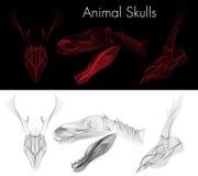 Zwierzęce czaszki Fotografia Royalty Free