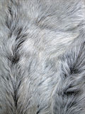 zwierzęce futerkowe szarość Zdjęcie Royalty Free