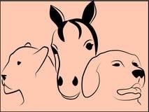 zwierzęce głowy Zdjęcie Royalty Free