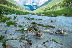 Zwierzęce kości w halnej rzece ekologia problem zanieczyszczenie środowisko naturalna selekcja w dzikiej naturze zdjęcie stock