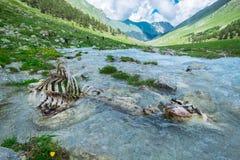 Zwierzęce kości w halnej rzece ekologia problem zanieczyszczenie środowisko naturalna selekcja w dzikiej naturze obraz stock