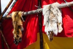Zwierzęce skóry wystawiać rodowitych amerykan ludźmi fotografia royalty free