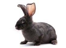 zwierzęcego gospodarstwa rolnego królik Zdjęcia Royalty Free
