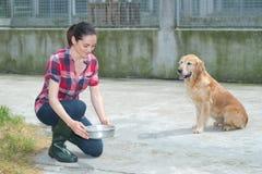 Zwierzęcego schronienia wolontariusza karmienia psy obraz royalty free