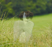 Zwierzęcia domowego żałoby anioła pies Obraz Stock