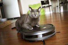 Zwierzęcia domowego życzliwy mądrze próżniowy cleaner zdjęcia royalty free