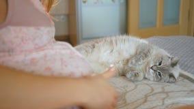 Zwierzęcia domowego spojrzenia w niespodziance przy dużym brzuchem swój kochanka Ciężarna młoda kobieta obok kota Zwierzę spada d zbiory wideo