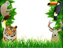 zwierzęcia dziki ramowy Zdjęcie Stock