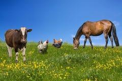 zwierzęcia gospodarstwo rolne zdjęcia stock