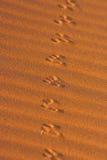 Zwierzęcy ślada w piasku w Namib pustyni Zdjęcie Stock