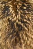 zwierzęcy brąz spadać tekstura biel zdjęcia royalty free