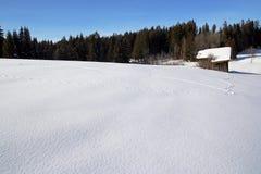 zwierzęcy czysty śnieg Zdjęcie Royalty Free