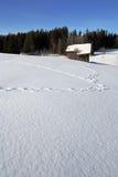 zwierzęcy czysty śnieg Fotografia Royalty Free