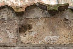 Zwierzęcy druk na ściana z cegieł w piekarnianym korytarzu w luebeck Zdjęcie Royalty Free