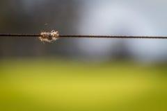 Zwierzęcy futerko łapiący na ogrodzenie drucie Obraz Stock